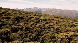 Fotografia del entorno de la Sierra de Gredos donde escuchar el silencio y disfrutar del movimiento slow
