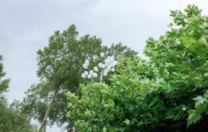 Detalle de árbol con globos en una boda en plena naturaleza