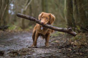 Perrito con tronco de madera en la boca