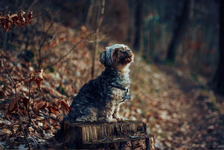 Perrito en el campo con los colores del otoño