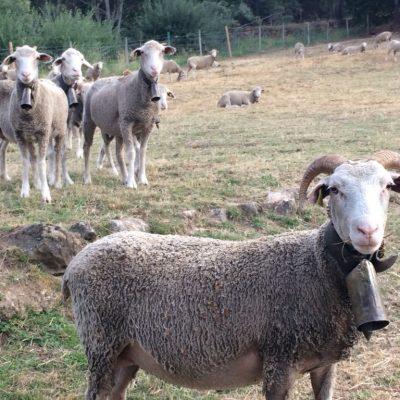 Animales en la sierra de Gredos